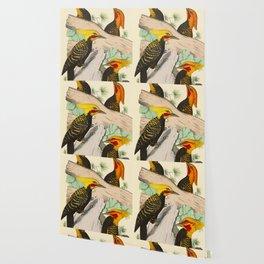 Monograph of the picides - Alf. Malherbe Scientific Bird Illustration Wallpaper