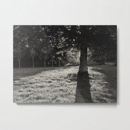 sycamore tree shadows at sunset Metal Print