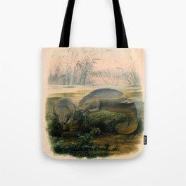 Vintage Scientific illustration, c. 1880 (Manatees) Tote Bag