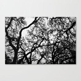 BlackTree Canvas Print