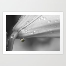 Colourful detail on black and white lily Art Print