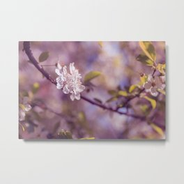 Spring Flowers, Sakura Photography Metal Print