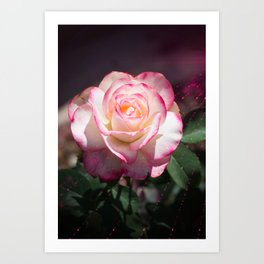 Pink and White Rose with a little magic Star Dust Art Print
