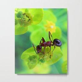 Ant on Spurge Metal Print