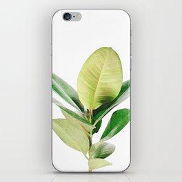 Rubber tree iPhone Skin