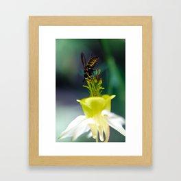 Buzzing Framed Art Print
