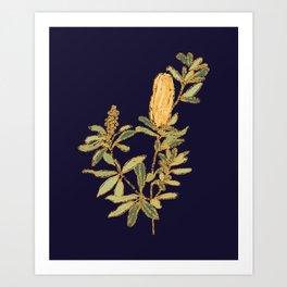 Banksia on Indigo Blue Botanical Illustration Art Print