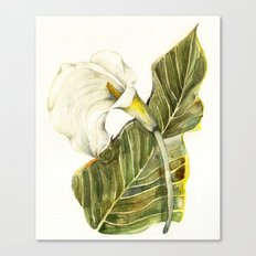 White Calla Lily Canvas Print