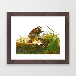 Winter Hawk Framed Art Print