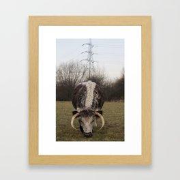 Cow, London Framed Art Print