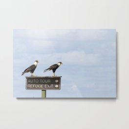 Crested Cara Cara Hawks Metal Print
