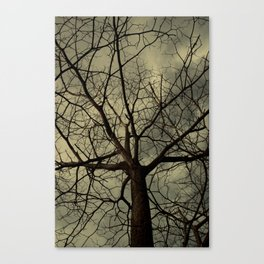 Branched Canvas Print