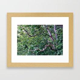An Old Branch Framed Art Print