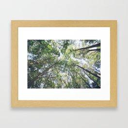 woodland 3428 Framed Art Print