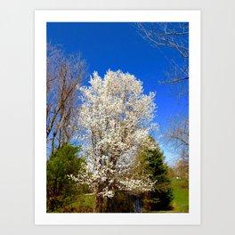 Beauty Against The Sky Art Print