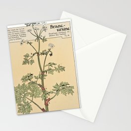 Maurice Pillard Verneuil - Étude de la plante (1903): Wild Angelica Stationery Cards