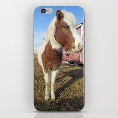 Mini Horse iPhone & iPod Skin