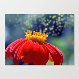 The Dance of the Pollen Canvas Print