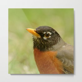 Red Robin Portrait Metal Print