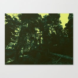 undergrowth Canvas Print