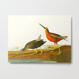 Red-breasted Snipe Bird Metal Print