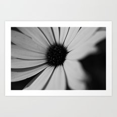 Black Daisy Art Print
