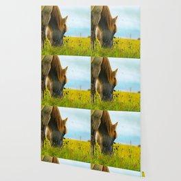 Horse longing Wallpaper
