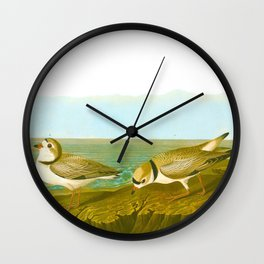 Piping Plover Bird Wall Clock
