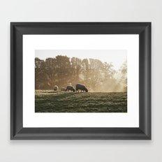 Sheep in fog at sunrise. Troutbeck, Cumbria, UK. Framed Art Print