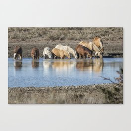Bachelor Band at the Waterhole Canvas Print