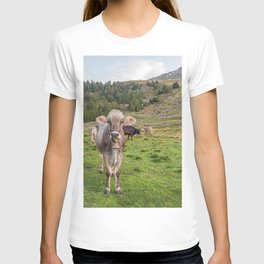 Cows grazing on an Italian pasture T-shirt