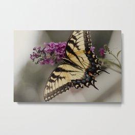The Swallowtail, 1 Metal Print