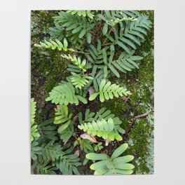 Moss and Fern Poster