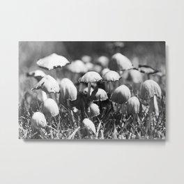 Shaggy Ink Cap Mushrooms 1 Metal Print