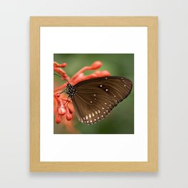 Butterfly On A Flower Framed Art Print