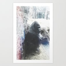 Grumpy Gorilla @ Buffalo Zoo in Buffalo, New York Art Print