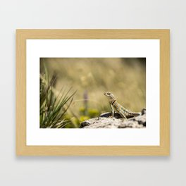 Lizard At Attention Framed Art Print