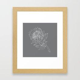 King Protea Outline - Grey and White Framed Art Print