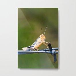 Hopper Two Metal Print