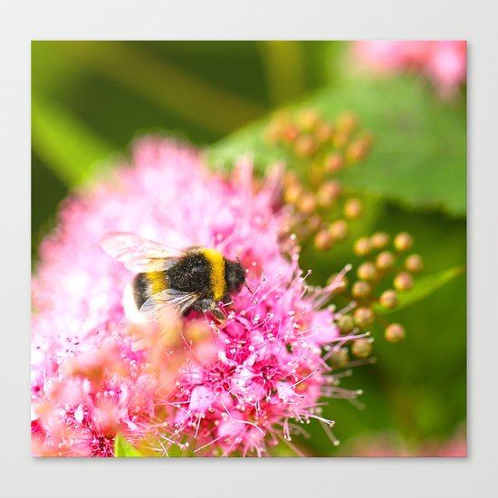 Busy Bee Bzzzzzzz Canvas Print
