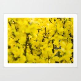 Yellow spring blooming Art Print