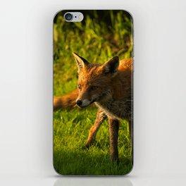 A Wet Wild Red Fox iPhone Skin