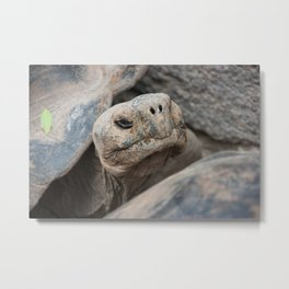 The ancient one Metal Print
