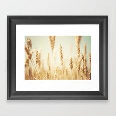 the cornfield ... Framed Art Print