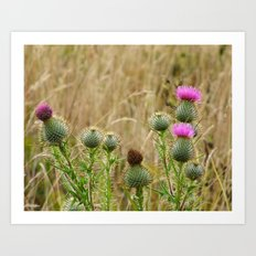Navaro Bluffs, fall flowers VII Art Print