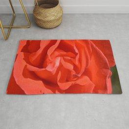 Romantic Orange Red Rose Bloom Macro View Tropicana Rose Rug