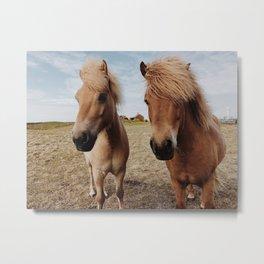Icelandic Horse #2 Metal Print