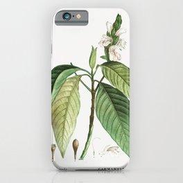 Malabar nut (Justicia adhatoda) from Traite des Arbres et Arbustes que lon cultive en France en plei iPhone Case
