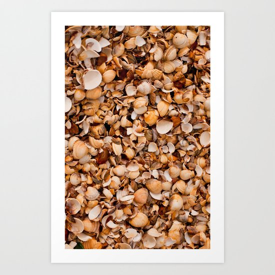 Sea Shells 2 Art Print