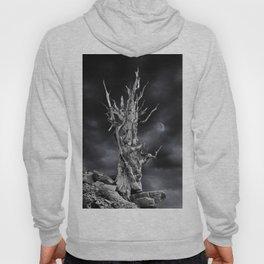 The ghost of Pinus longaeva 2. Hoody